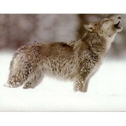 Những con sói trong tâm hồn