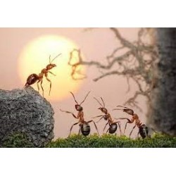 Bài học lãnh đạo từ loài kiến